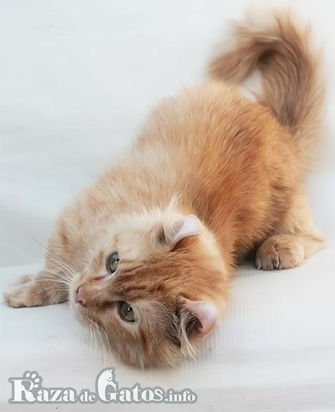 Imágen del gatito Kinkalow jugando.