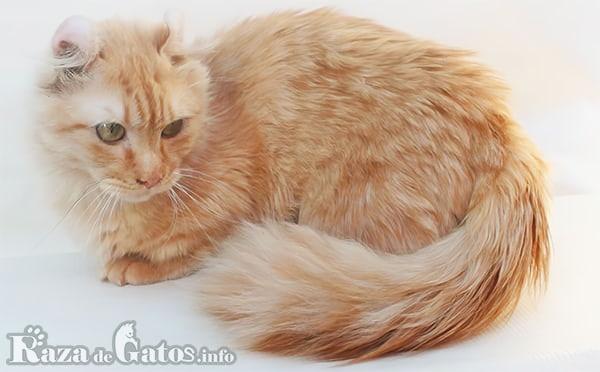 imágen del gato Kinkalow, y su parecido con el felino Tigre.