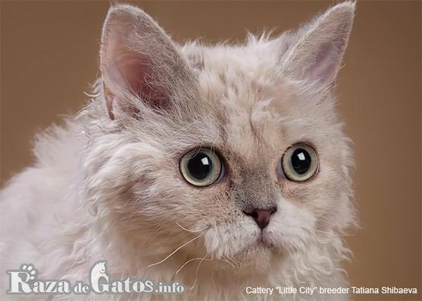 Imágen de la cara del gato Lambkin.