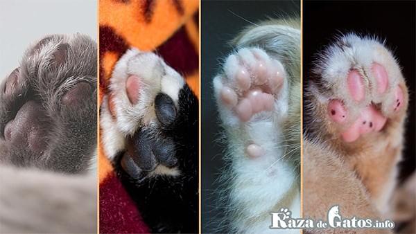 Fotografia de varias almohadillas de gatos en sus pies. Las patas de los gatos ¿Qué características tienen?