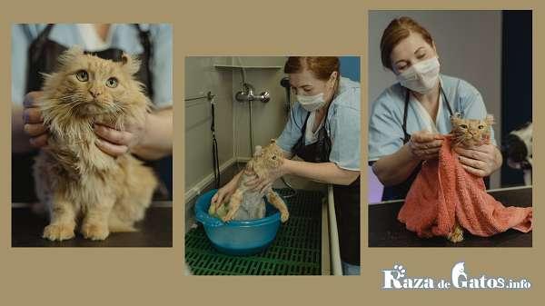 ¿Como bañar a un gato? Conmsejos utiles.