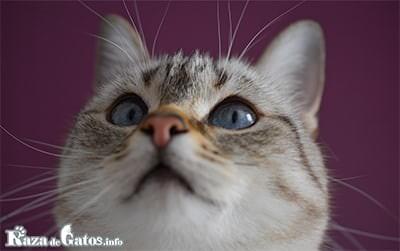 Foto para la entrada de: ¿Que función cumplen los bigotes del gato?