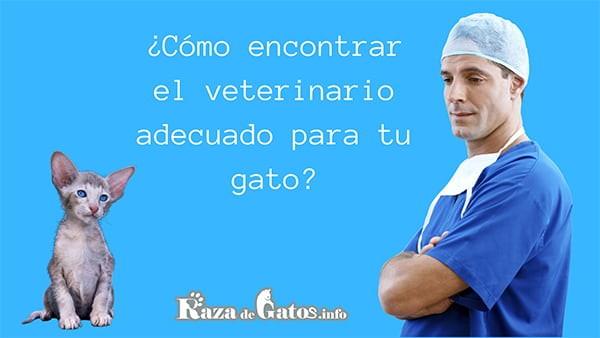 Imagen de un veterinario junto a un gatito. Consejos para elegir un buen veterinario.