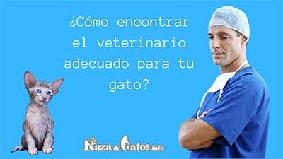 Foto de un veterinario junto a un gato. Consejos para elegir un buen veterinario. El veterinario perfecto.