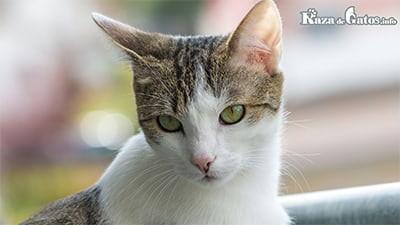 Foto de una gata. Castración de gatos y diferencias con esterilizar.