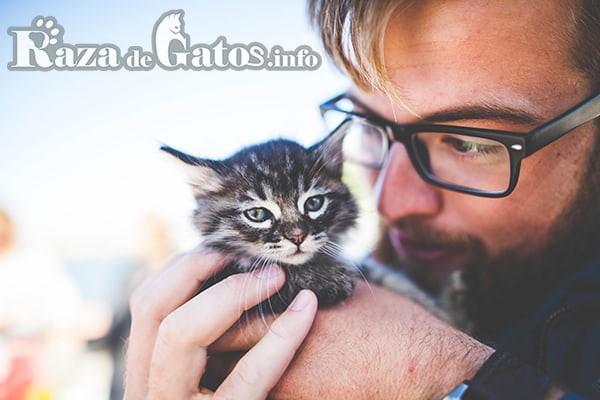Gatito bebe recibiendo cariño. Imagen para el articulo de los cuidados de un gatito bebé.