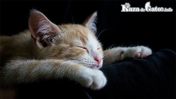 Imagen de gatito durmiendo. ¿Cuantas horas duermen los gatos al día?