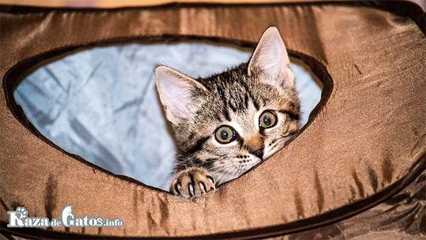 Gatito en Bolso Transportador.