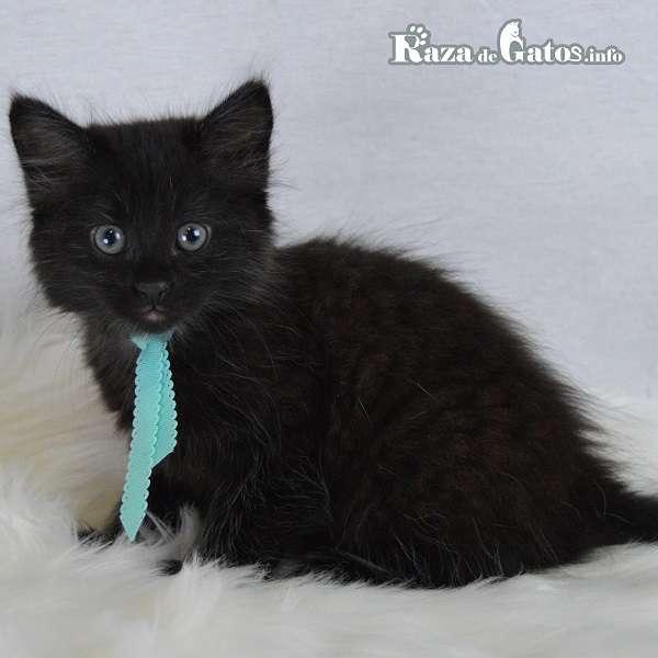 Nombres para gatos - De acuerdo al color de su manto.