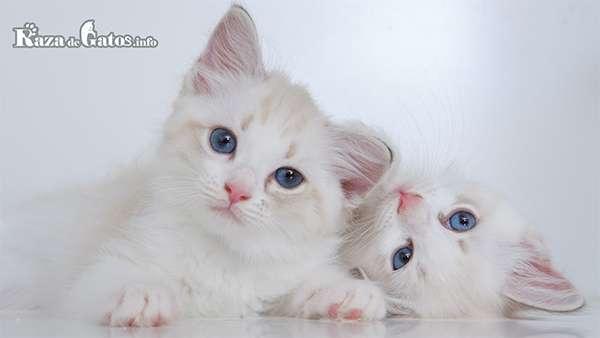 El día Internacional del Gato