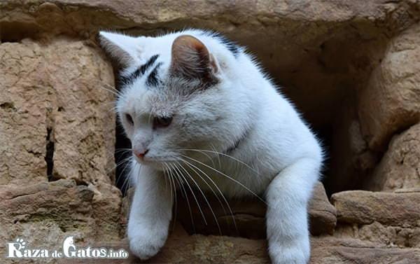 Fotografía de un gato en una cueva. ¿Qué función cumplen los bigotes del gato?