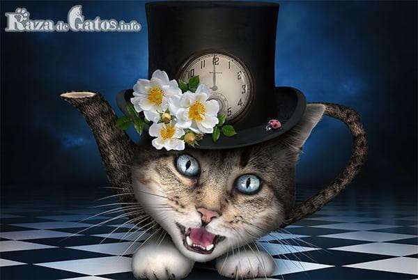 Foto de gato alucinando. IMAGEN PARA HIERBA GATERA (NEPETA CATARIA) O HIERBA GATUNA
