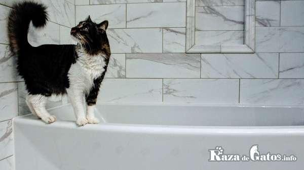 Gatito en bañadera.