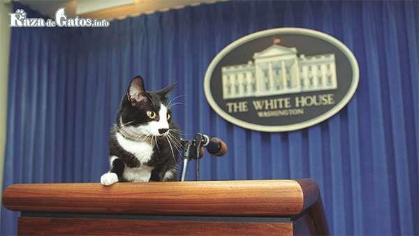 Socks, el gato de Bill Clinton - Día Internacional del Gato