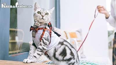 ¿Se puede sacar a pasear a un gato?