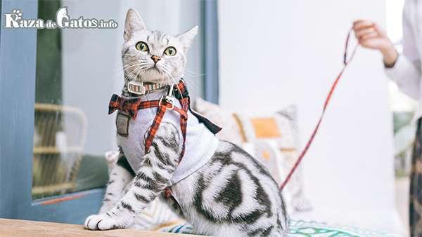 ¿Se puede sacar a pasear a un gato? ¿Es necesario el uso del arnés?