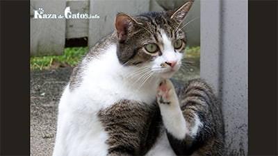 Tipos de parásitos en los gatos: internos y externos