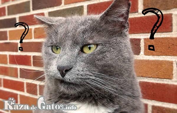 Foto de un gato pensativo. para imagén destacada de las 25 curiosidades que no sabias de los gatos.