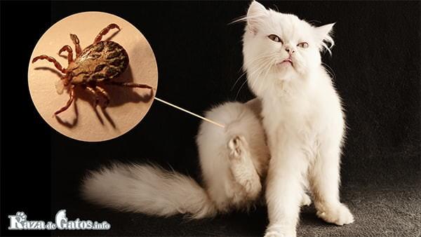 Imagen de gato con garrapatas y/o pulgas. clases de parásitos en los gatos, Internos y externos