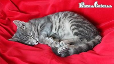 Gato durmiendo. Cuantas horas duermen los gatos
