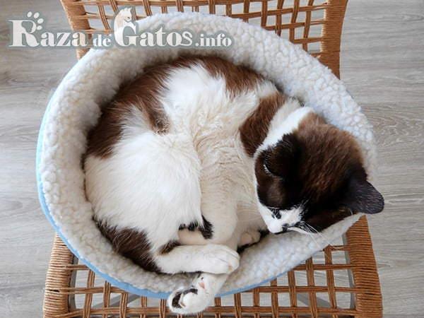 Gato durmiendo en una camita pequeña. Todo sobre camas para gatos y su utilidad.