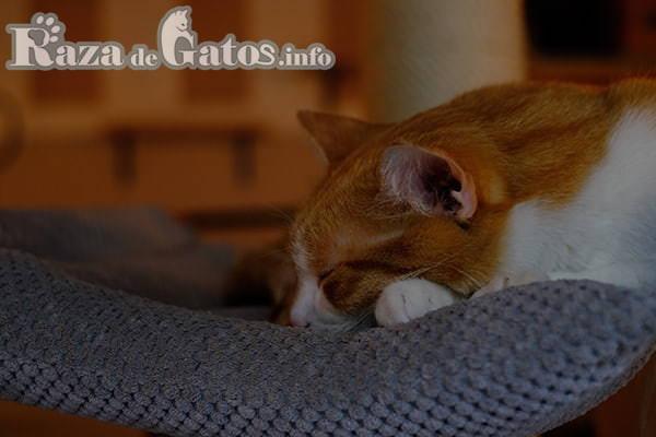 Gato durmiendo. Imagen, para camas para gatos y du utilidad.