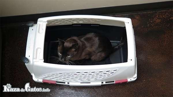 Transportador Canil para gatos.