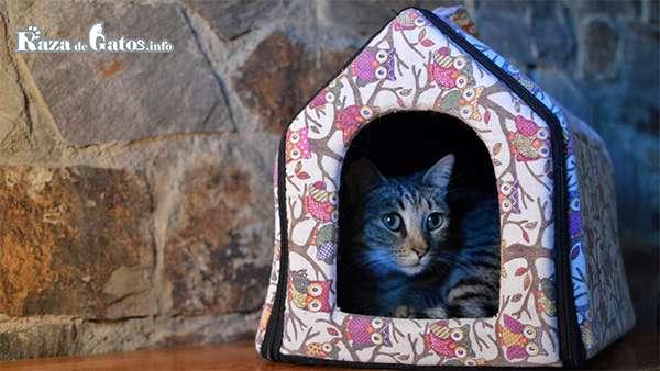 Casita para gatos. Primer Día de mi Gato en Casa