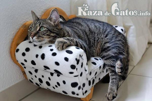 Imágen de Gato en sillón mirando con cariño. ¿Cómo se comunican los gatos?