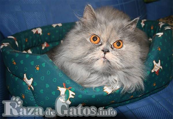 Gato en su cama - Camas para gatos.