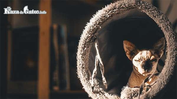 Michi en un tunel para gatos.