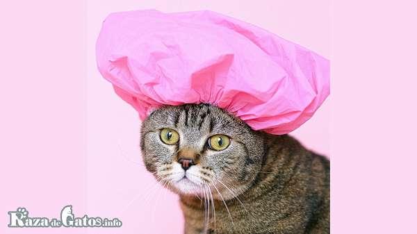 Bañar a un gato. Consejos.
