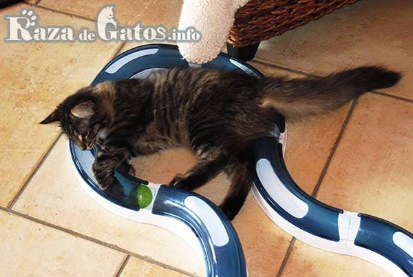 Foto de Gato juego de los sentidos en circuito.