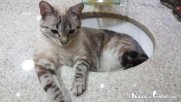 Gato en su baño. ¿Se puede bañar a un gato?