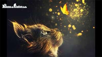 Misión espiritual del Gato - Gato mirando una mariposa