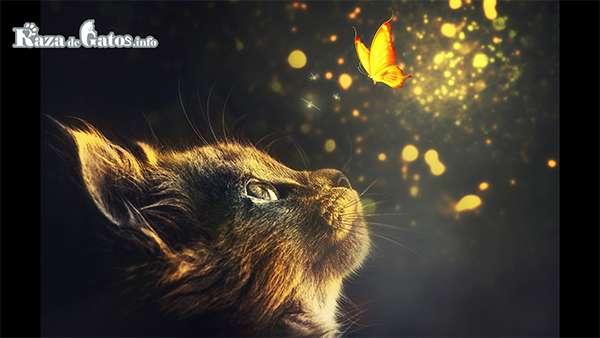 Gato mirando una mariposa - Misión espiritual del Gato