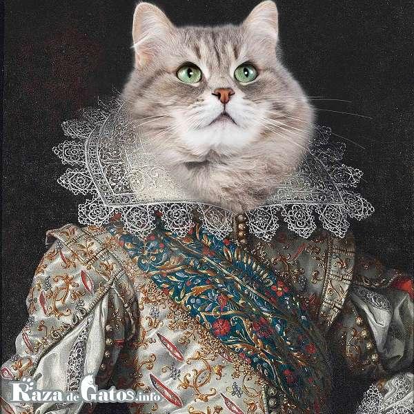 Nombres para gatos – razadegatos.info