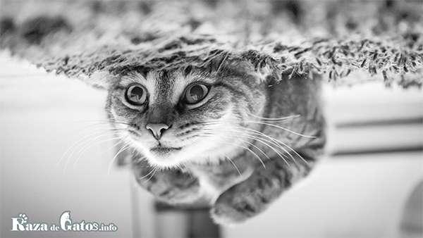 ¿Los gatos pueden nadar? ¿Le temen al agua?