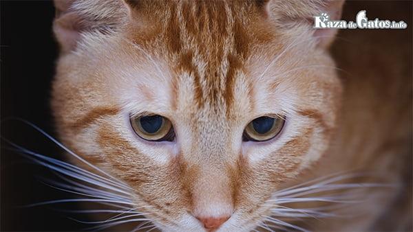 Letra M en la frente de los gatos