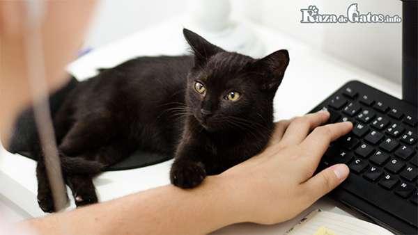 Imagen de un gato negro en el teclado. Gatos negros.