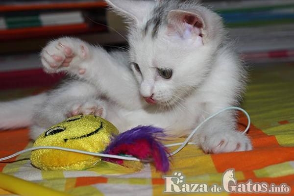 Gato jugando con juguetes de peluche con plumas.