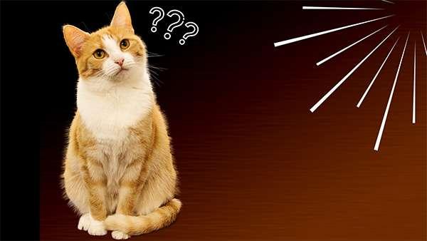 Leyendas sobre el Origen de los Gatos