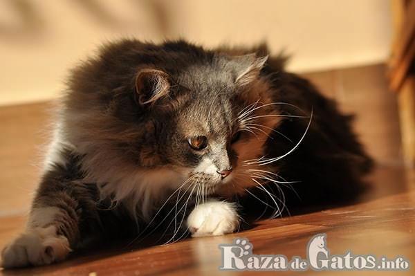 Gato siguiendo luz laser. Fotografía.
