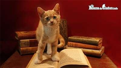 Leyendas del Origen de los Gatos