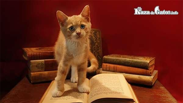 Leyendas del Origen de los Gatos.