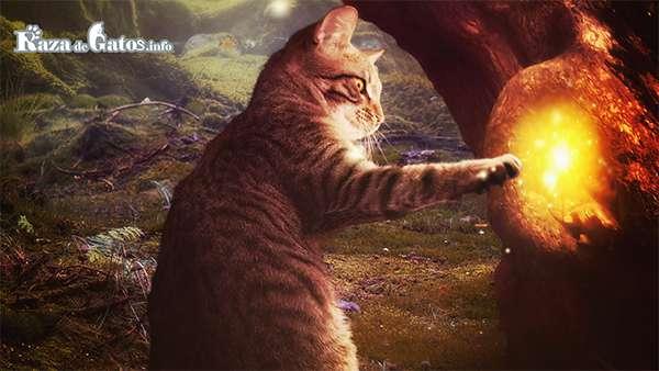 Gato tocando un arbol - Misión espiritual del Gato