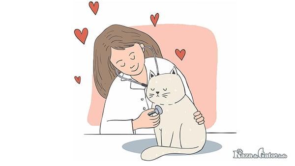 Fotografía de una veterinaria junto a un gatito bebe. ¿Como escoger un buen veterinario para mis mascotas?