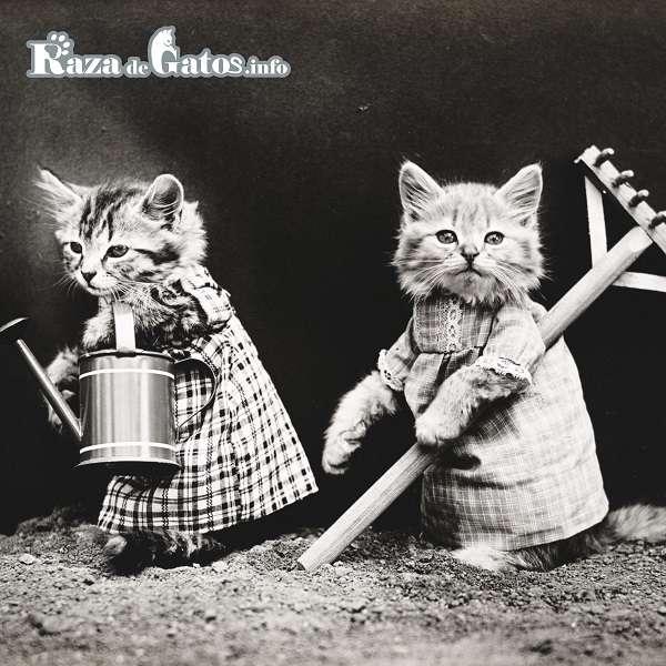 Dos Gatitos campesinos -Nombres para gatos