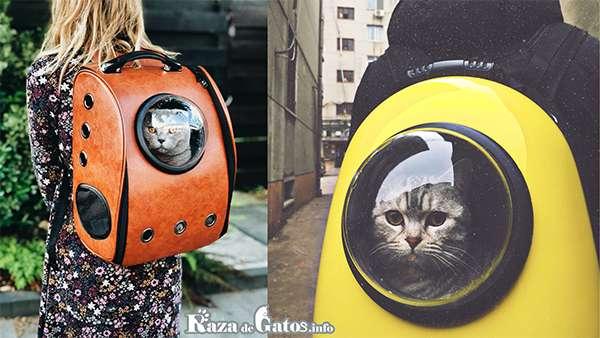 Gatos en mochilas Transportadoras.