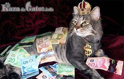 Foto con gato rodeado de dinero. Como imágen destacada de los gatos mas caros del mundo.